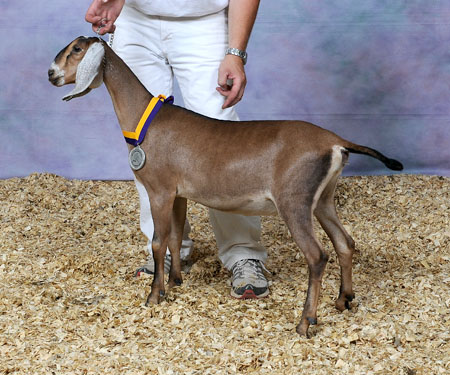 Nubian goat sperm for sale fish sushi college